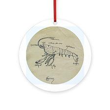Crayfish Anatomy Ornament (Round)