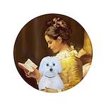 Reading / Maltese 3.5
