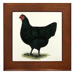Jersey Giant: Black Hen Framed Tile