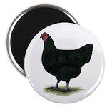"Jersey Giant: Black Hen 2.25"" Magnet (100 pac"