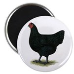 "Jersey Giant: Black Hen 2.25"" Magnet (10 pack"