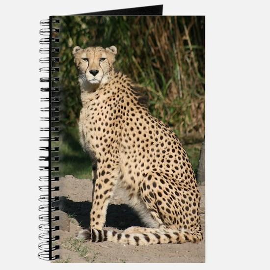 Journal-Cheetah