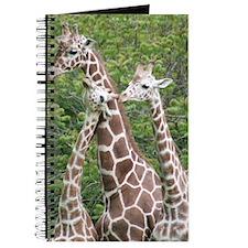 Journal-Giraffes
