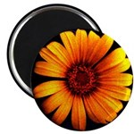 Yellow Daisy Fine Art Magnet