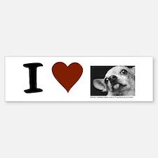 """""""I heart Chihuahuas"""" Bumper Bumper Bumper Sticker"""