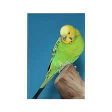 Rectangle Magnet-Parakeet