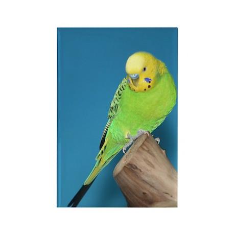 Rectangle Magnet-Parakeet