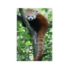 Rectangle Magnet-Red Panda