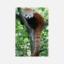 Rectangle Magnet-Red Panda