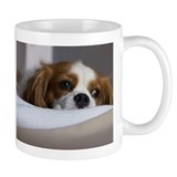Cavalier king charles spaniel Small Mugs (11 oz)