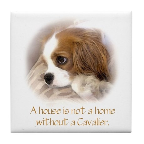 Cavalier King Charles Spaniel Chat Room