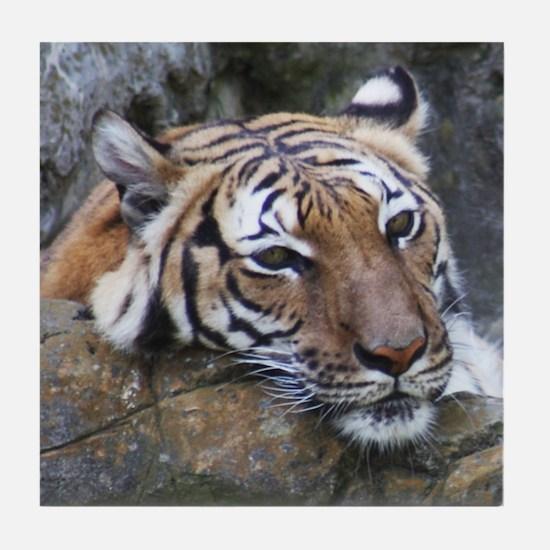 Tiger Portrait Tile Coaster