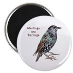 Starlings Are Darlings Magnet