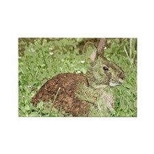 Rabbit in the Grass Rectangle Magnet