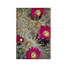 Cactus Flowers Rectangle Magnet