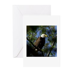 Bald Eagle local pictures Greeting Cards (Pk of 10