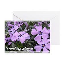 Purple Phlox Thinking of You Cards 5x7 (20 Pk)