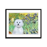 Irises / Maltaese (B) Framed Panel Print