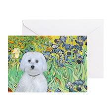 Irises / Maltaese (B) Greeting Card