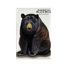 American Black Bear Rectangle Magnet
