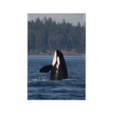 Rectangle Magnet-Whale (Orca)