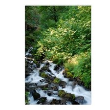 Peace Like a River Postcards (Package of 8)