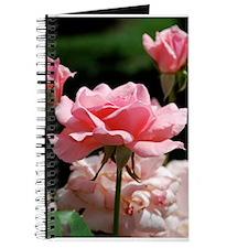Growing Roses Journal