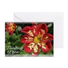 Red Dahlia Thinking of You Cards 5x7 (20 Pk)