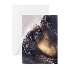Wistful Greeting Cards (Pk of 10)