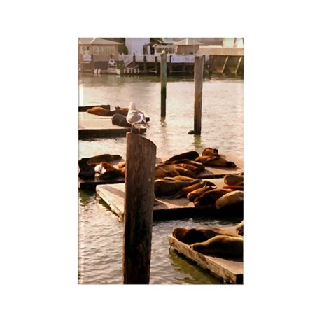 Pier 39 Sea Lions Rectangle Magnet