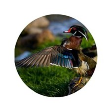 """Wood Duck Wing 3.5"""" Button"""