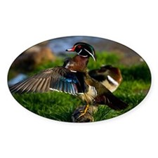 Wood Duck Wing Decal