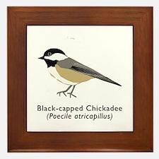 black-capped chickadee Framed Tile