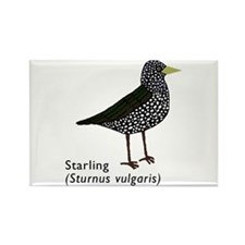 starling Rectangle Magnet