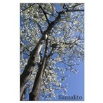 Cherry Blossom Tree in Sausalito LG Poster