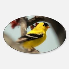American Goldfinch Oval Decal