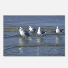 Seagull Heaven Postcards (Package of 8)