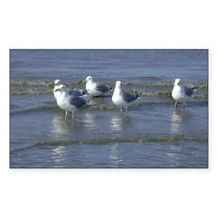 Seagull Heaven Decal