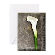 Single Calla Lilly Greeting Card