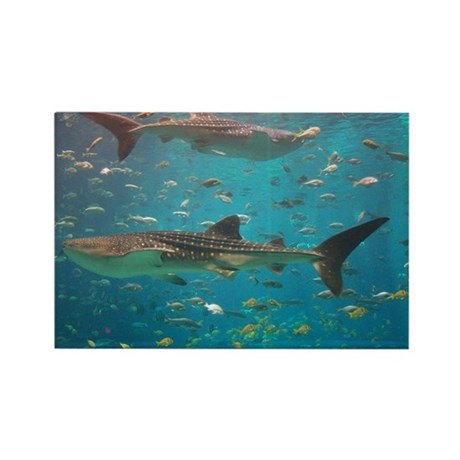 Rectangle Magnet-Whale Shark