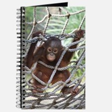 Journal-Orangutan