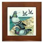Rock Doves Framed Tile