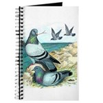 Rock Doves Journal