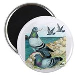 "Rock Doves 2.25"" Magnet (10 pack)"