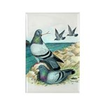 Rock Doves Rectangle Magnet