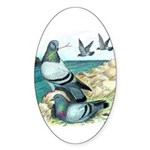 Rock Doves Oval Sticker