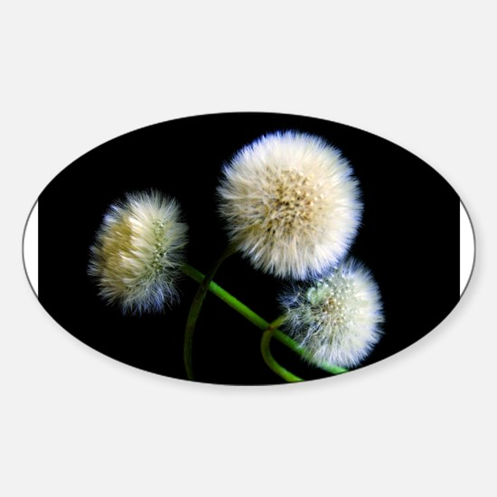 Make a Wish Sticker (Oval)