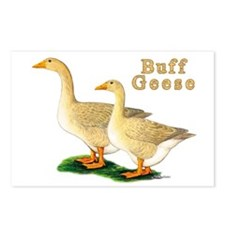 Buff Geese #5 Postcards (Package of 8)