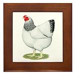 Wyandotte Columbian Hen Framed Tile