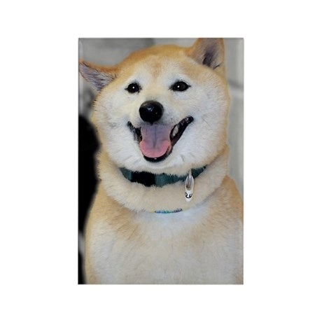 Shiba Inu Photo Rectangle Magnet